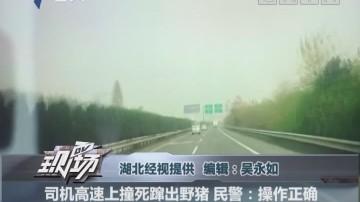 司机高速上撞死蹿出野猪 民警:操作正确