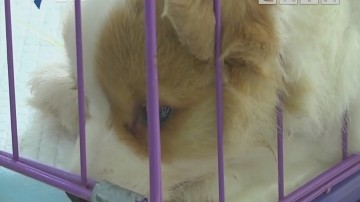 街坊求助:购买宠物犬 连续两次都是病狗