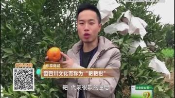 """因四川文化而称为""""耙耙柑"""""""