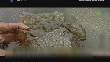 汕头:韩江中不明物件 海洋专家鉴别为苔藓动物