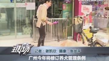 广州今年将修订养犬管理条例