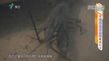 [HD][2019-05-27]摇钱树:养澳洲淡水龙虾收益巨大