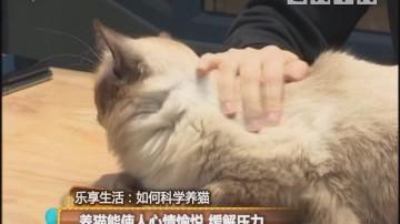 养猫能使人心情愉悦 缓解压力