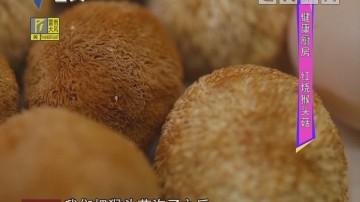 健康厨房:红烧猴头菇