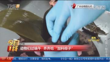"""广州:动物们过端午 齐齐吃""""加料粽子"""""""