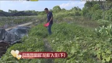 """[2019-06-09]人间真情:月季园里的""""花样""""人生(下)"""