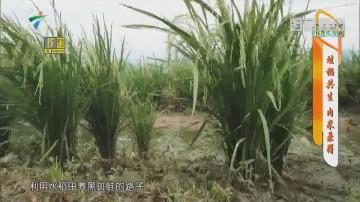 [HD][2019-07-29]摇钱树:蛙稻共生 肉米兼得