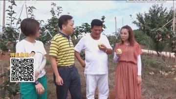 正宗连州水晶梨