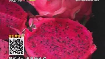 红心火龙果