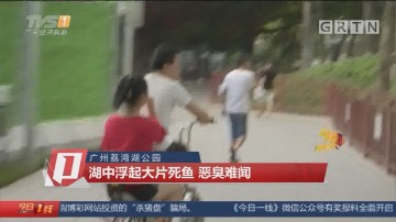 广州荔湾湖公园:湖中浮起大片死鱼 恶臭难闻