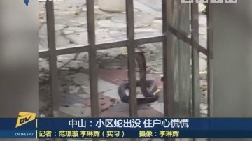 (DV现场)中山:小区蛇出没 户心慌慌