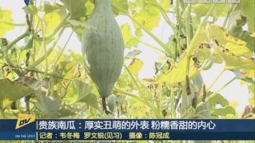 (DV现场)贵族南瓜:厚实丑萌的外表 粉糯香甜的内心