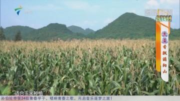 [HD][2019-09-09]摇钱树:麦羹香飘满阳山