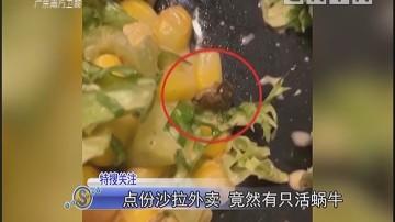 点份沙拉外卖 竟然有只活蜗牛