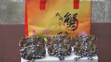 阳澄湖中湖精品大闸蟹
