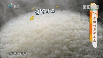 [HD][2019-12-09]摇钱树:香飘四溢优质米