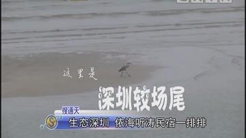 生态深圳 依海听涛民宿一排排