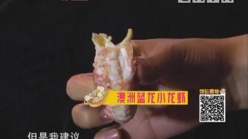 澳洲蓝龙小龙虾