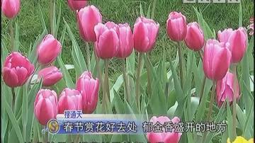 春节赏花好去处 郁金香盛开的地方
