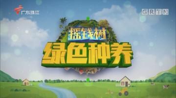[HD][2020-03-20]摇钱树:开拓视野 创清新冰糖桔品牌