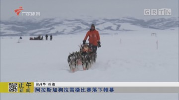 阿拉斯加狗拉雪橇比赛落下帷幕