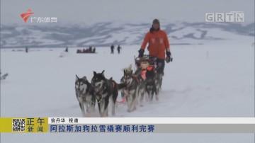 阿拉斯加狗拉雪橇赛顺利完赛