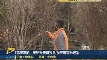 (DV现场)花农求助:果树疑屡遭投毒 损失惨重盼破案