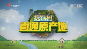 [HD][2020-04-13]摇钱树:龙门黄酒