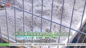 广州:店铺内大量猫来历不明 物管称将处理