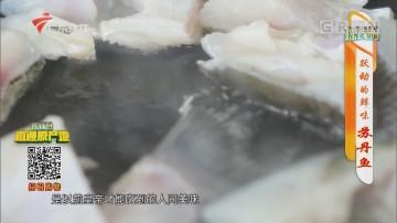 [HD][2020-04-21]摇钱树:跃动的鲜味 苏丹鱼
