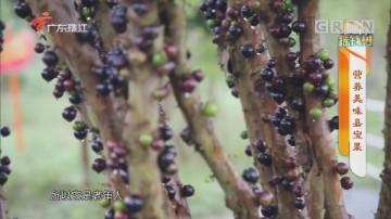 [HD][2020-04-17]摇钱树:营养美味嘉宝果