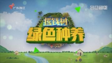 [HD][2020-04-02]摇钱树:蚯蚓养殖的秘密