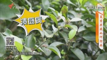 [HD][2020-06-24]摇钱树:夏季果蔬如何防病