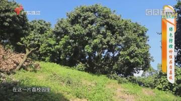 [HD][2020-06-18]摇钱树:绿色防控种植品质荔枝