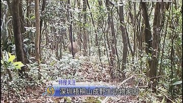 深圳梧桐山成野生动物家园
