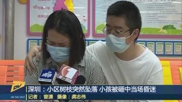 深圳:小区树枝突然坠落 小孩被砸中当场昏迷