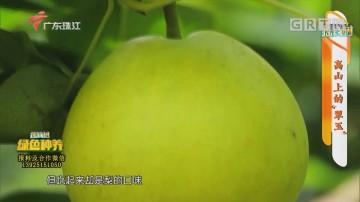 """[HD][2020-06-30]摇钱树:高山上的""""翠玉"""""""