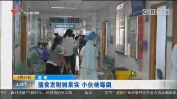 惠州:摘食发财树果实 小伙被毒倒