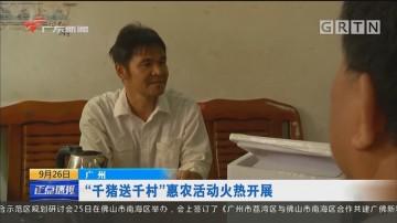 """广州:""""千猪送千村""""惠农活动火热开展"""