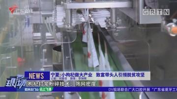 宁夏:小枸杞做大产业 致富带头人引领脱贫攻坚