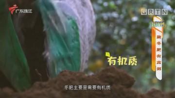 [HD][2020-11-25]摇钱树:施冬肥有高招