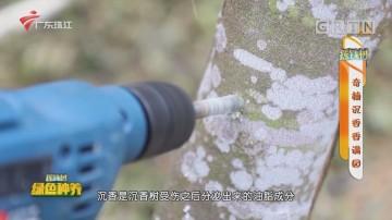 [HD][2020-11-26]摇钱树:奇楠沉香香满园