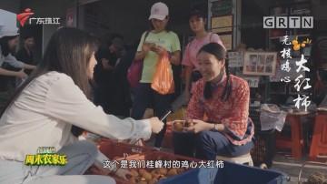 [HD][2020-11-23]摇钱树:无核鸡心大红柿