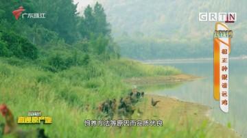 [HD][2020-12-14]摇钱树:根正种靓清远鸡