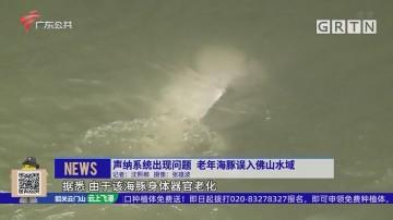 声纳系统出现问题 老年海豚误入佛山水域