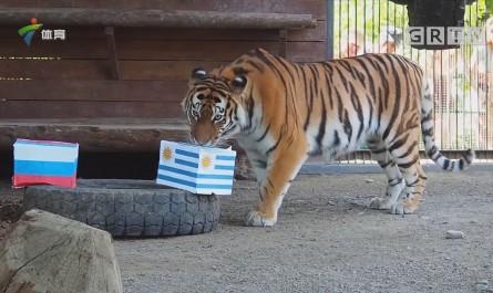 大猫看好俄罗斯胜乌拉圭