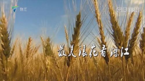 [HD][2018-12-11]珠江纪事:最美浪花看珠江