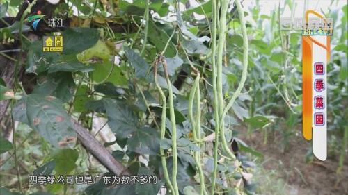 [HD][2019-07-01]摇钱树:四季菜园