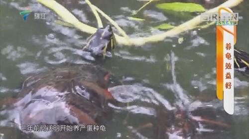 [HD][2019-07-15]摇钱树:养龟效益好
