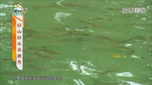 [HD][2019-10-28]摇钱树:好山好水养靓鱼